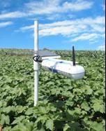2.3. systeme-sans-fil-sap-ip-ir-leaf-temperature